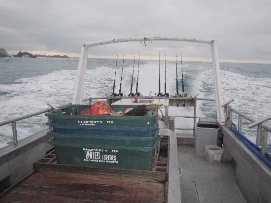 Kaikoura Fishing Charters Foto