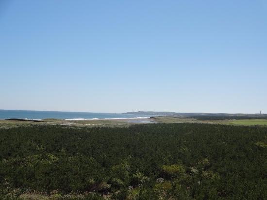 Erimo-cho, Japan: 砂浜と植樹の松