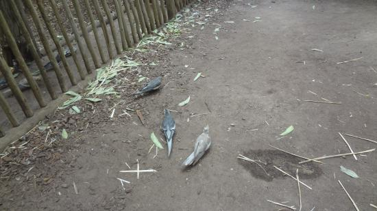 Klapmuts, Zuid-Afrika: BUTTERFLY WORLD FREE AS BIRDS