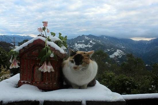 Cingiing Dream Forest Villa: 2016清境下雪囉