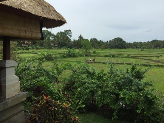 The Ubud Village Resort & Spa: photo2.jpg