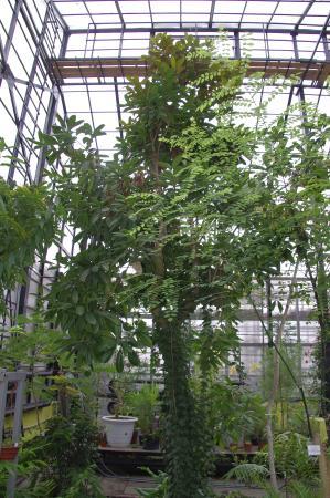 NII Botanical Garden
