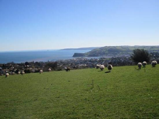 Higher Holcombe Farm Holiday Cottages : View from top field over Teignmouth and Shaldon