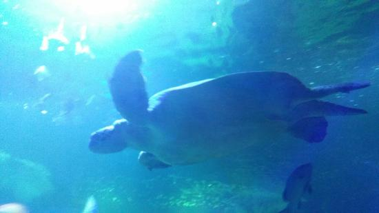 ... - Picture of Hunstanton Sea Life Sanctuary, Hunstanton - TripAdvisor