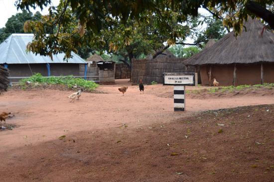 Chief Makumi Village Cultural Tour - Tour