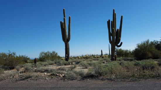 Waddell, AZ: 20160125_111745_large.jpg