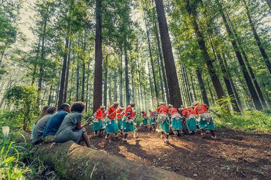 Sudáfrica: Forest Rain Dance