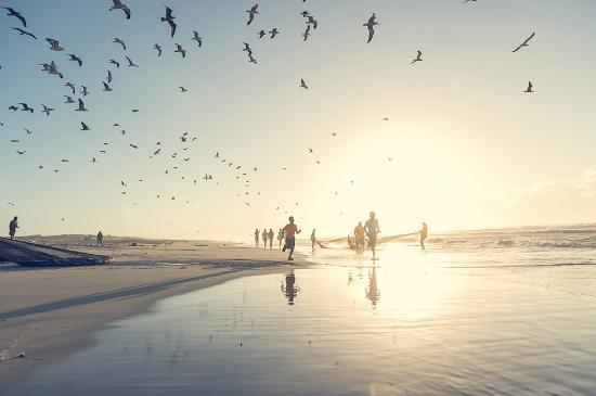 Sør-Afrika: Sardine Run