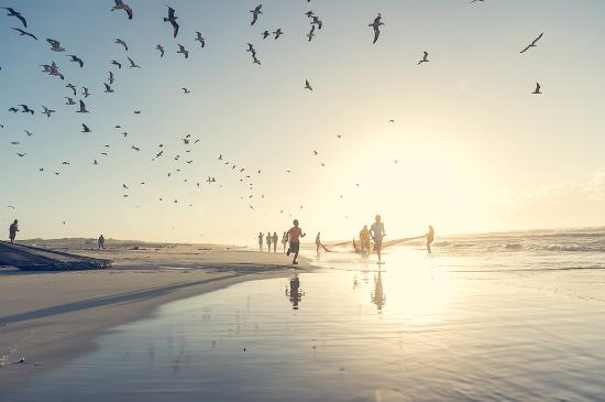 Sudáfrica: Sardine Run
