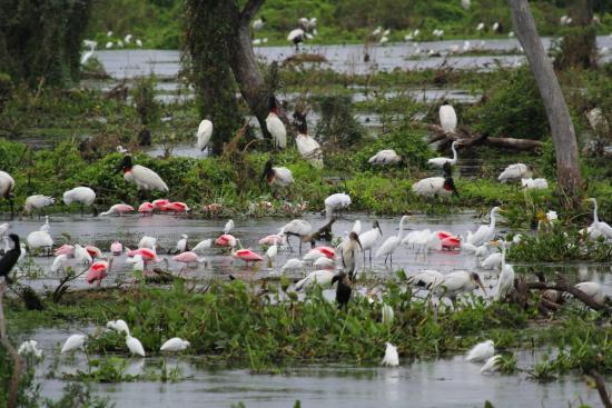 Las Lomitas, Argentina: Gran cantidad de aves cerca del l vertedero del Bañado La Estrella.