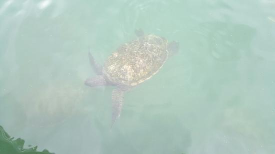 Cayman Turtle Centre: Island Wildlife Encounter Photo