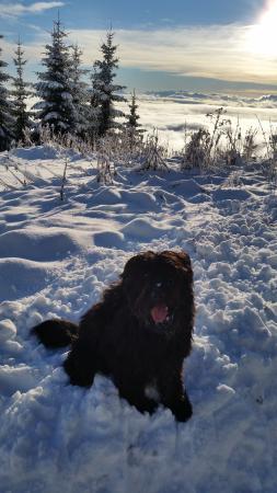 Treffen, Österreich: Lui im Schnee