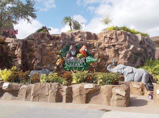 Reservations Rainforest Cafe Disney Springs