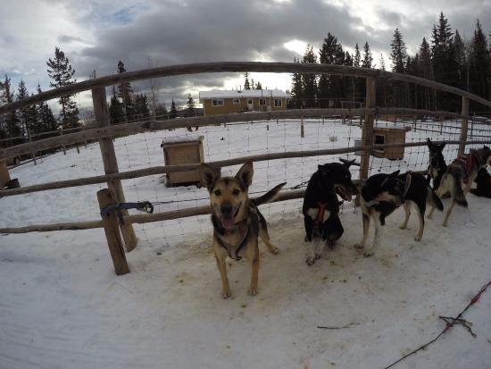 ‪Dog Sled Tours.ca‬