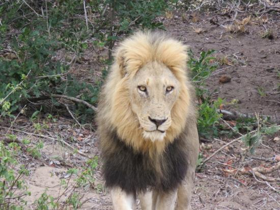 Bilde fra Ngala Private Game Reserve