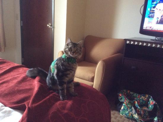 Jackson, MO: Kitty
