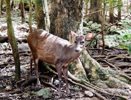 Foto Barbados Wildlife Reserve