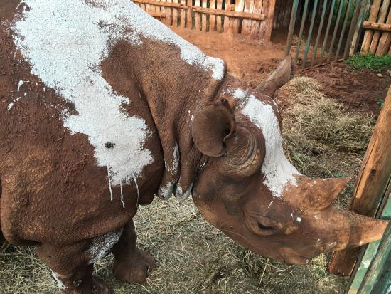 Foto de Nairobi Education Centre - Animal Orphanage