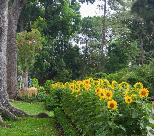 Flower garden - Picture of Zoo and Botanical Gardens, Ho Chi Minh ...