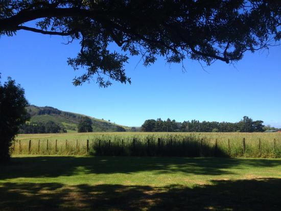 Carterton, Nya Zeeland: The picnic area on a hot sunny day