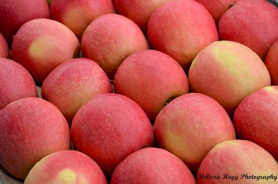 Bridge Mall Farmers Market - Regional producers