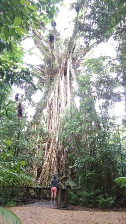 Yungaburra, ออสเตรเลีย: IMAG0897_large.jpg
