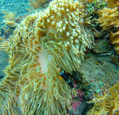 Tulamben, Indonesien: photo3.jpg