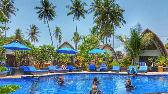 Oceans 5 Dive Resort: The pool bungalows with the huge pool in the front