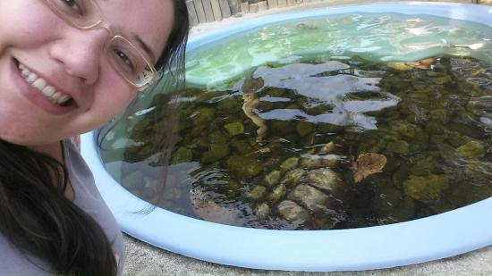 Projeto Tamar: Projeto Tartarugas Marinhas (Tamar)