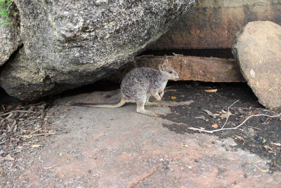 Granite Gorge Nature Park: photo1.jpg