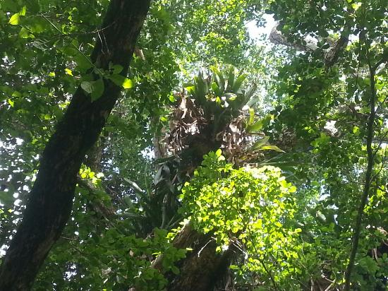 Grounds at Cabarete Caves, El Choco National Park