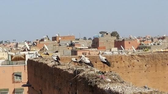 Riad El Mansour 사진