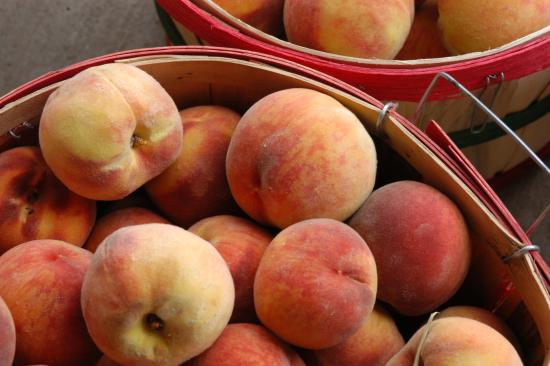 Palisade, CO: Peach Harvest