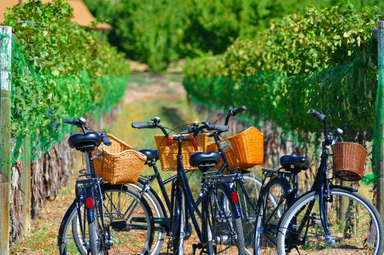 Palisade, CO: Biking and Vineyard