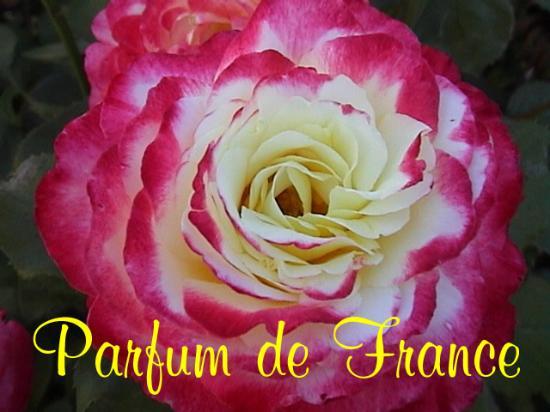 Fontevraud-l'Abbaye, Francia: My logo