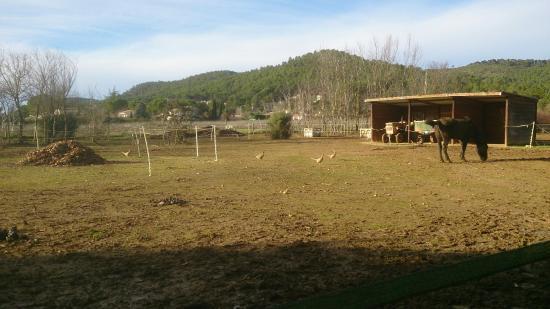 Le Val, France : Chevaux et poules faisanes