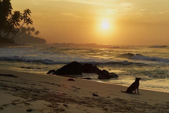 Amanda Beach Villa: photo2.jpg