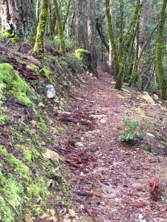 Early part of the Papoose Pass Trail