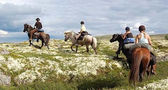 Roste Hyttetun og Camping: Ridetur i Os