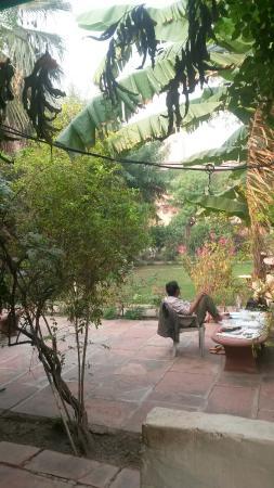 Jungle Lodge Image