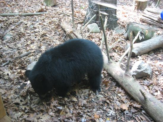 Binder Park Zoo Photo