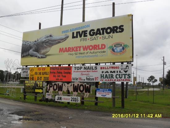 Auburndale, FL: Auberndale