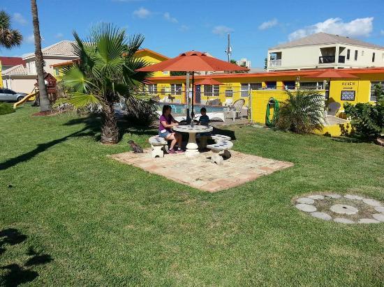 South Beach Inn: Front Picnic Area