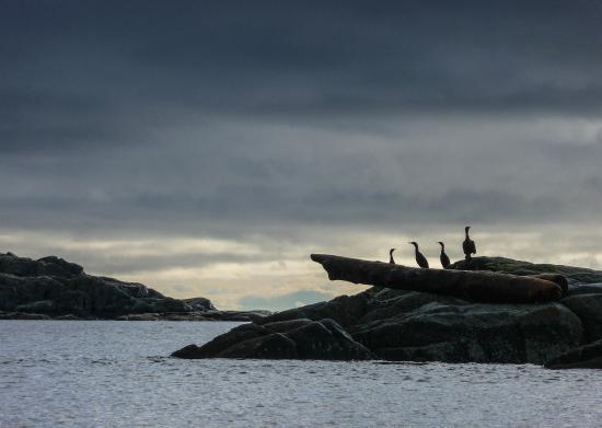 Zdjęcie Heriot Bay