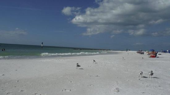 Honeymoon Island State Park: Honeymoon island beach.