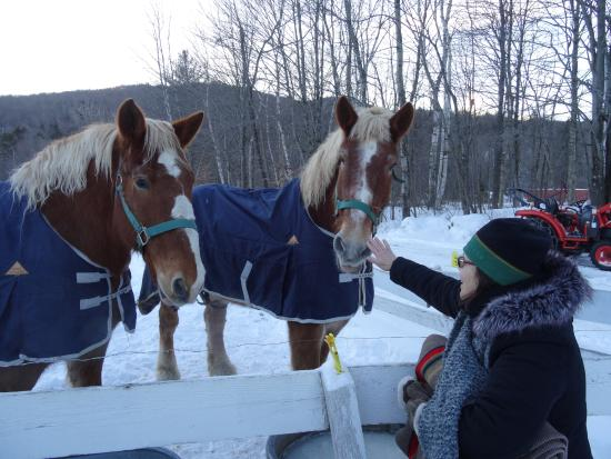 Gentle Giants Sleigh and Carriage Rides Foto