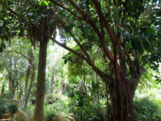 Les Jardins Exotiques de Bouknadel Photo