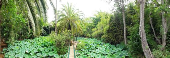Jardin polyn sien picture of les jardins exotiques de bouknadel rabat tripadvisor - Jardin exotique sale nice ...