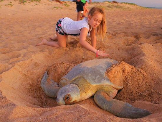 Northern Territory, Australien: Sea Turtle Tours Darwin