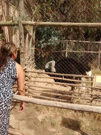 Serena Zoo